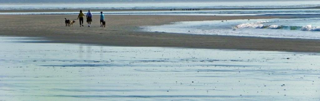 beachresize leashes wide